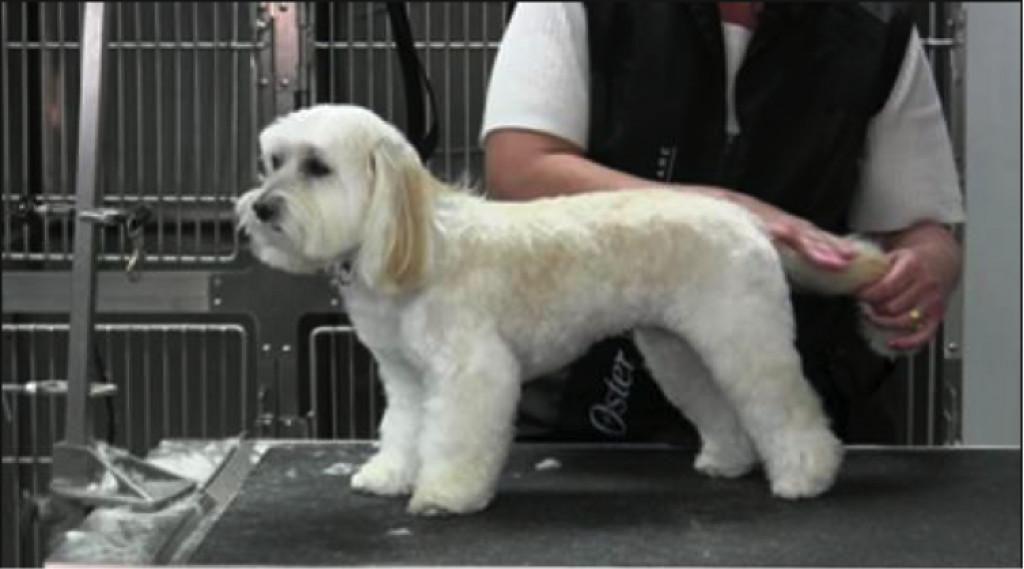 Klipper du selv din hund, eller går du til hundefrisør?